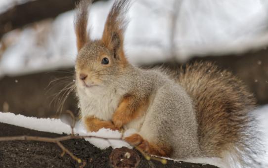 8 советов по зимней фотосъемке